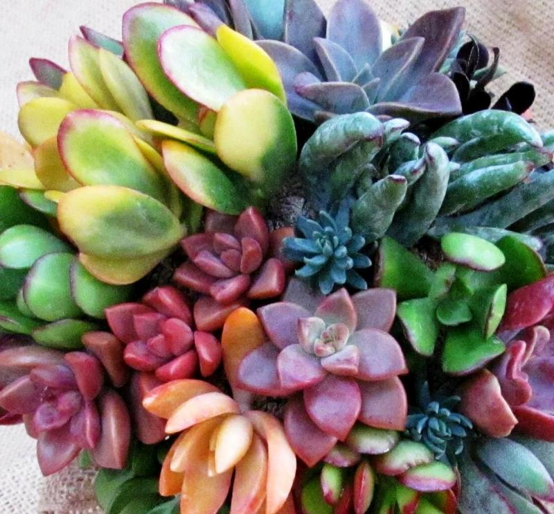 Captivating Succulent Solutions   Home